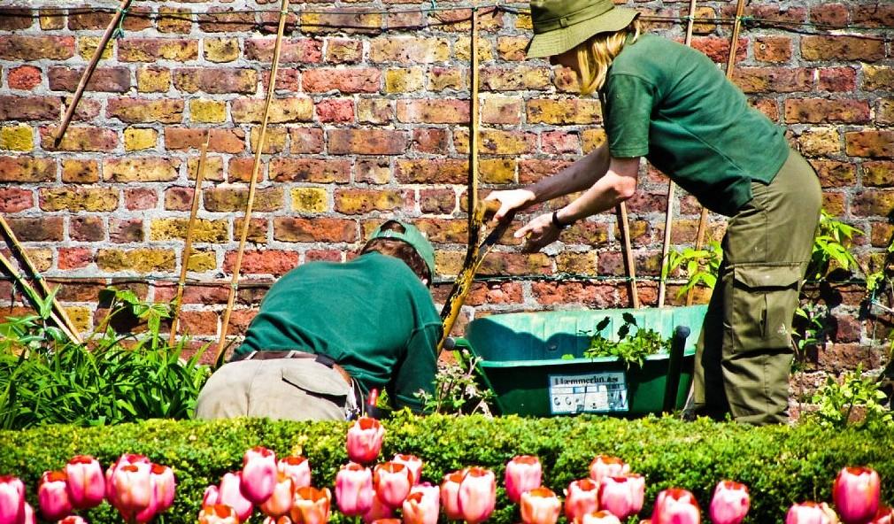 Cómo cuidar tu jardín esta primavera
